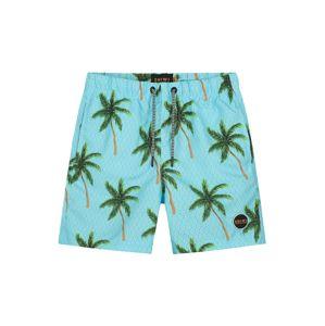 Shiwi Plavecké šortky 'palms'  tyrkysová / zelená